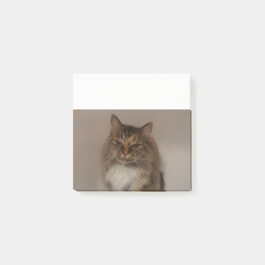 Calico Cat Post it Notes