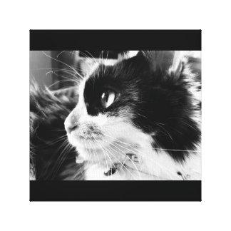 Calico cat print