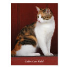 Calico Cats Rule! Post Card