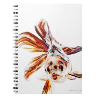 Calico Fantail Comet goldfish (Carassius Spiral Note Books