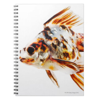 Calico Fantail Comet goldfish Spiral Notebooks