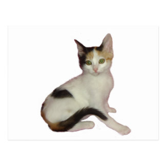 Calico Kitten Cutout Post Card