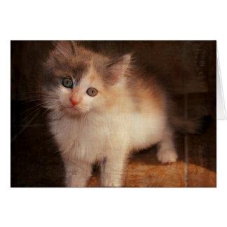 Calico Kitten Notecard Card