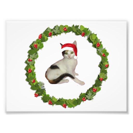 Calico Kitten's Christmas Wreath Photo