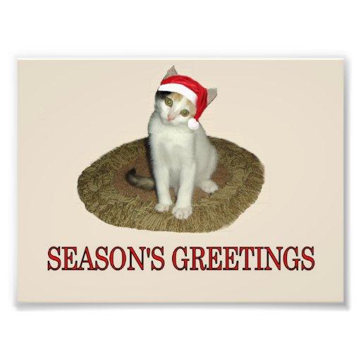 Calico Kitten's Season's Greetings Photographic Print