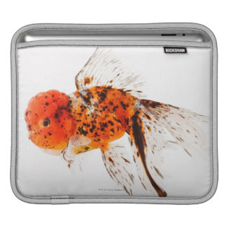 Calico lionhead goldfish (Carassius auratus) iPad Sleeve