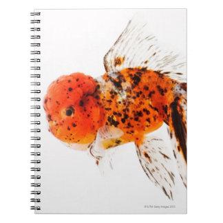 Calico lionhead goldfish (Carassius auratus) Notebooks