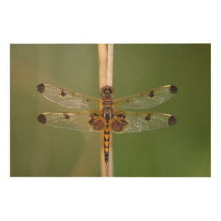 Calico Pennant Wood Print