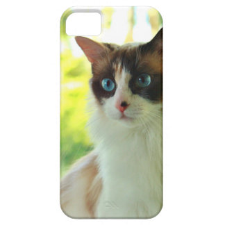 Calico Ragdoll Kitty Custom Phone Cases and Skins iPhone 5 Case