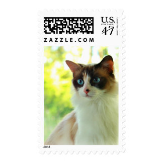 Calico Ragdoll Kitty Postage Stamps