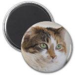 Calico tabby cat face fridge magnets
