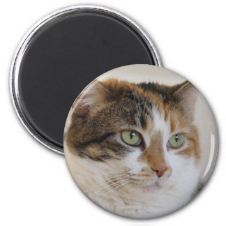 Calico tabby cat face magnet