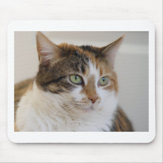 Calico tabby cat face mouse pad