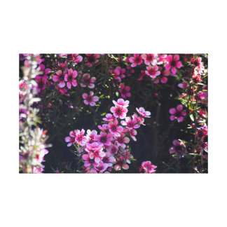 California 5 stretched canvas prints
