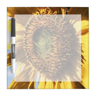California, A Mammoth Sunflower (Helianthus) 1 Dry Erase Board