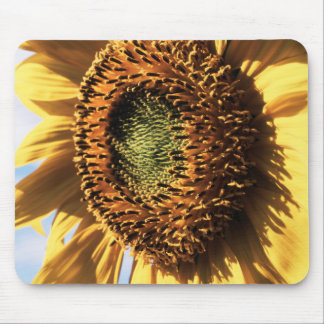 California, A Mammoth Sunflower (Helianthus) 1 Mouse Mat