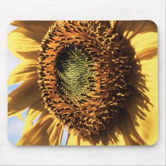 California, A Mammoth Sunflower (Helianthus) 1 Mouse Mat