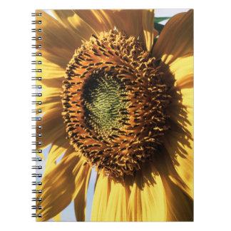 California, A Mammoth Sunflower (Helianthus) 1 Notebooks