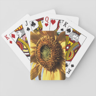 California, A Mammoth Sunflower (Helianthus) 1 Playing Cards