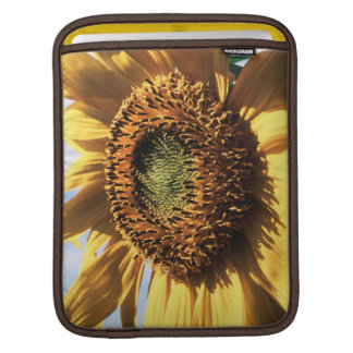 California, A Mammoth Sunflower (Helianthus) 1 Sleeves For iPads