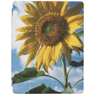 California, A Mammoth Sunflower (Helianthus) 2 iPad Cover