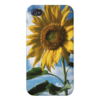 California, A Mammoth Sunflower (Helianthus) 2 iPhone 4/4S Cover