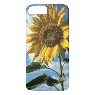 California, A Mammoth Sunflower (Helianthus) 2 iPhone 8 Plus/7 Plus Case