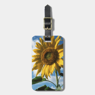 California, A Mammoth Sunflower (Helianthus) 2 Luggage Tag