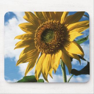California, A Mammoth Sunflower (Helianthus) 2 Mouse Mat