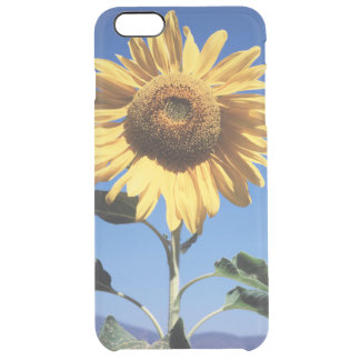 California, A Mammoth Sunflower (Helianthus) 3 Clear iPhone 6 Plus Case