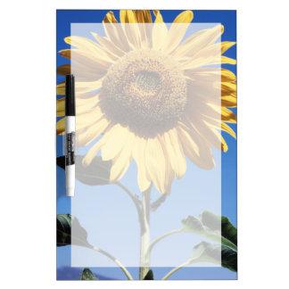 California, A Mammoth Sunflower (Helianthus) 3 Dry Erase Board