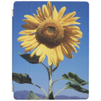 California, A Mammoth Sunflower (Helianthus) 3 iPad Cover