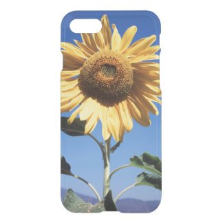 California, A Mammoth Sunflower (Helianthus) 3 iPhone 8/7 Case