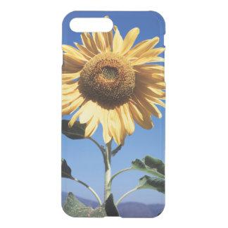 California, A Mammoth Sunflower (Helianthus) 3 iPhone 8 Plus/7 Plus Case