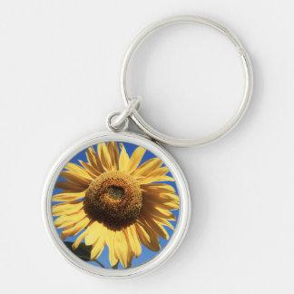California, A Mammoth Sunflower (Helianthus) 3 Key Ring