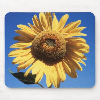 California, A Mammoth Sunflower (Helianthus) 3 Mouse Mat