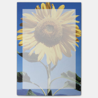 California, A Mammoth Sunflower (Helianthus) 3 Post-it Notes