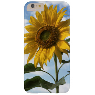 California, A Mammoth Sunflower (Helianthus) 4 Barely There iPhone 6 Plus Case