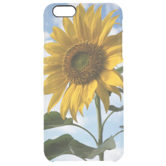 California, A Mammoth Sunflower (Helianthus) 4 Clear iPhone 6 Plus Case
