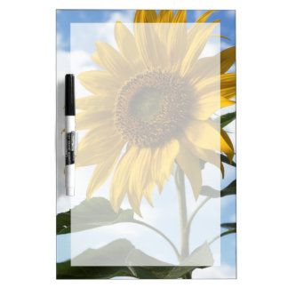 California, A Mammoth Sunflower (Helianthus) 4 Dry Erase Board