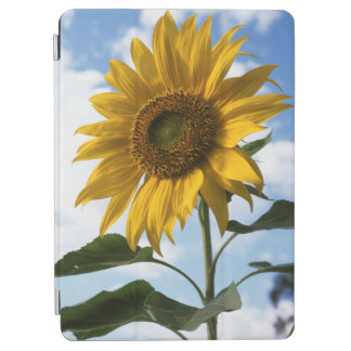 California, A Mammoth Sunflower (Helianthus) 4 iPad Air Cover