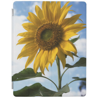 California, A Mammoth Sunflower (Helianthus) 4 iPad Cover