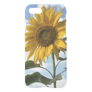California, A Mammoth Sunflower (Helianthus) 4 iPhone 8/7 Case