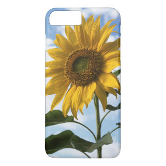 California, A Mammoth Sunflower (Helianthus) 4 iPhone 8 Plus/7 Plus Case