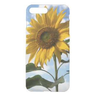 California, A Mammoth Sunflower (Helianthus) 4 iPhone 8 Plus/7 Plus Case