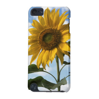 California, A Mammoth Sunflower (Helianthus) 4 iPod Touch (5th Generation) Covers