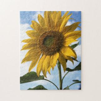 California, A Mammoth Sunflower (Helianthus) 4 Jigsaw Puzzle