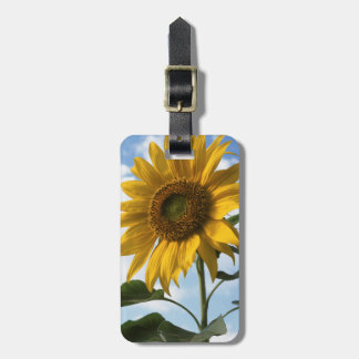 California, A Mammoth Sunflower (Helianthus) 4 Luggage Tag