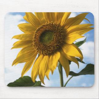 California, A Mammoth Sunflower (Helianthus) 4 Mouse Mat