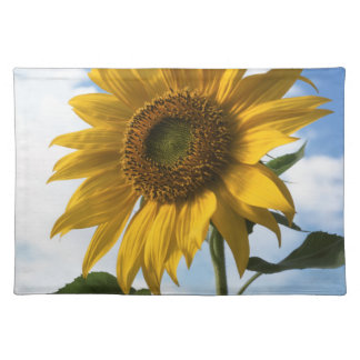 California, A Mammoth Sunflower (Helianthus) 4 Placemat